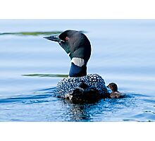 Adult Loon and Baby - Mississippi Lake, Ontario Photographic Print