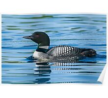 Common Loon - Mississippi Lake, Ontario Poster