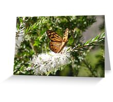 Male Common Brown Butterfly on a Moonah Flower Greeting Card