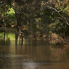 Deep Creek, Bulla, Country Victoria  by MIchelle Thompson