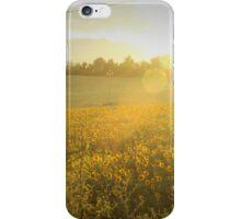 Le Marche Sunflowers iPhone Case/Skin