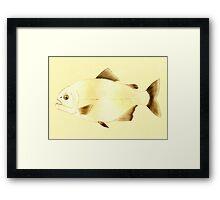 Piranha Fish Framed Print