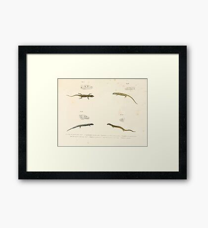 Leopold Joseph Fitzinger 1867 0089 Picture Atlas for popular scientific natural history of vertebrates Framed Print