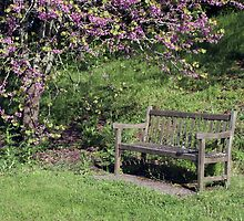 Sitting in Spring by WendyJC