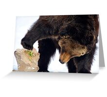 Bear looking under a rock Greeting Card