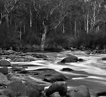 Dwellingup Rapids. by Dejezza