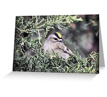 Gold Crested Kinglet Greeting Card
