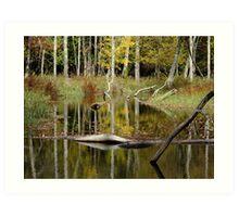Beaver Pond- Eels Creek Provincial Park Art Print