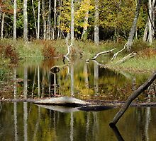 Beaver Pond- Eels Creek Provincial Park by Tracy Wazny