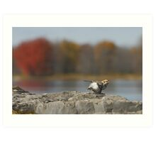 On The Wings of a Snow Bunting  Art Print