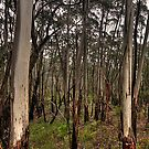 Patterns Of The Bush - Along A Country Road, Blue Mountains Sydney - The HDR Experience by Philip Johnson