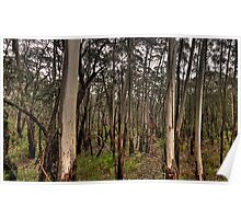 Patterns Of The Bush - Along A Country Road, Blue Mountains Sydney - The HDR Experience Poster