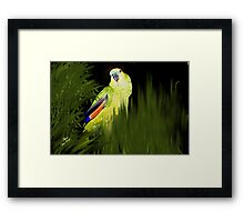 MY JAZZ... The Singer!!..got to watch the parrot singing Framed Print