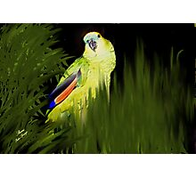 MY JAZZ... The Singer!!..got to watch the parrot singing Photographic Print