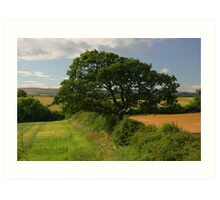 Ash tree in the English countryside Art Print