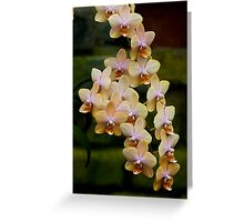 "Phalaenopsis ""Leyte Gold"" Greeting Card"