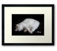 PRECIOUS, ,,MY BEAUTIFUL RESCUED KITTY f..FUNNY SUNDAY....KITTY VIDEO Framed Print