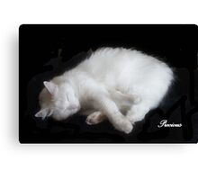 PRECIOUS, ,,MY BEAUTIFUL RESCUED KITTY f..FUNNY SUNDAY....KITTY VIDEO Canvas Print