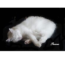 PRECIOUS, ,,MY BEAUTIFUL RESCUED KITTY f..FUNNY SUNDAY....KITTY VIDEO Photographic Print