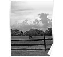 Horse & Fence - Walnford Poster