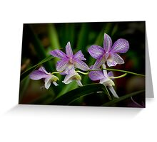 "Dendrobium ""Doctor Prakob"" Greeting Card"
