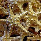 Starfish, Starfish, Starfish.....Key West, Florida by Debbie Pinard