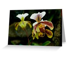 "Paphiopedilum Olympus ""The Chairman"" Greeting Card"
