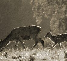Hind and fawn by Debbie Ashe