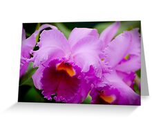 "Laeliocattleya ""Recital"" Greeting Card"