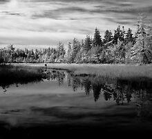 Still Water Reflection - Acadia National Park by David Clayton