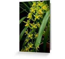 "Cymbidium ""Fifi Harry"" Greeting Card"