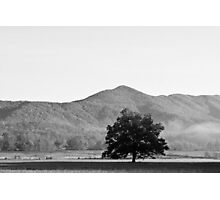 Lone Tree - Cades Cove Tennesee Photographic Print