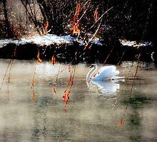 The spirit of Tchaikovsky  by Brian Bo Mei
