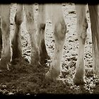 HORSES LEGS by scarletjames