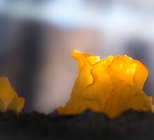 Yellow jelly like a candle by finnarct