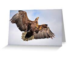 Sea Eagle Greeting Card