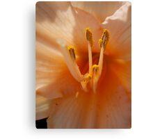peach lily Canvas Print