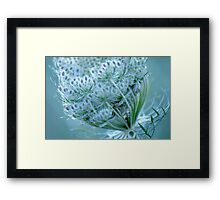 Queen Anne's Lace #3 Framed Print