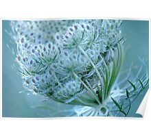 Queen Anne's Lace #3 Poster