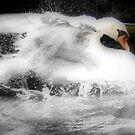 Making A Splash by naturelover