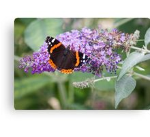 Red Admiral Butterfly on Buddleia Canvas Print