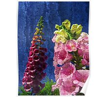 Two Foxglove flowers on texture reaching for the sky. Poster