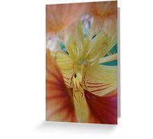 Nasturtium macro Greeting Card