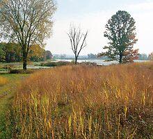 French Creek, Portage Wis by Mona Gainey-Lanier