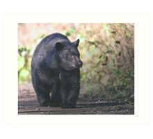 Young Adult Black Bear Art Print