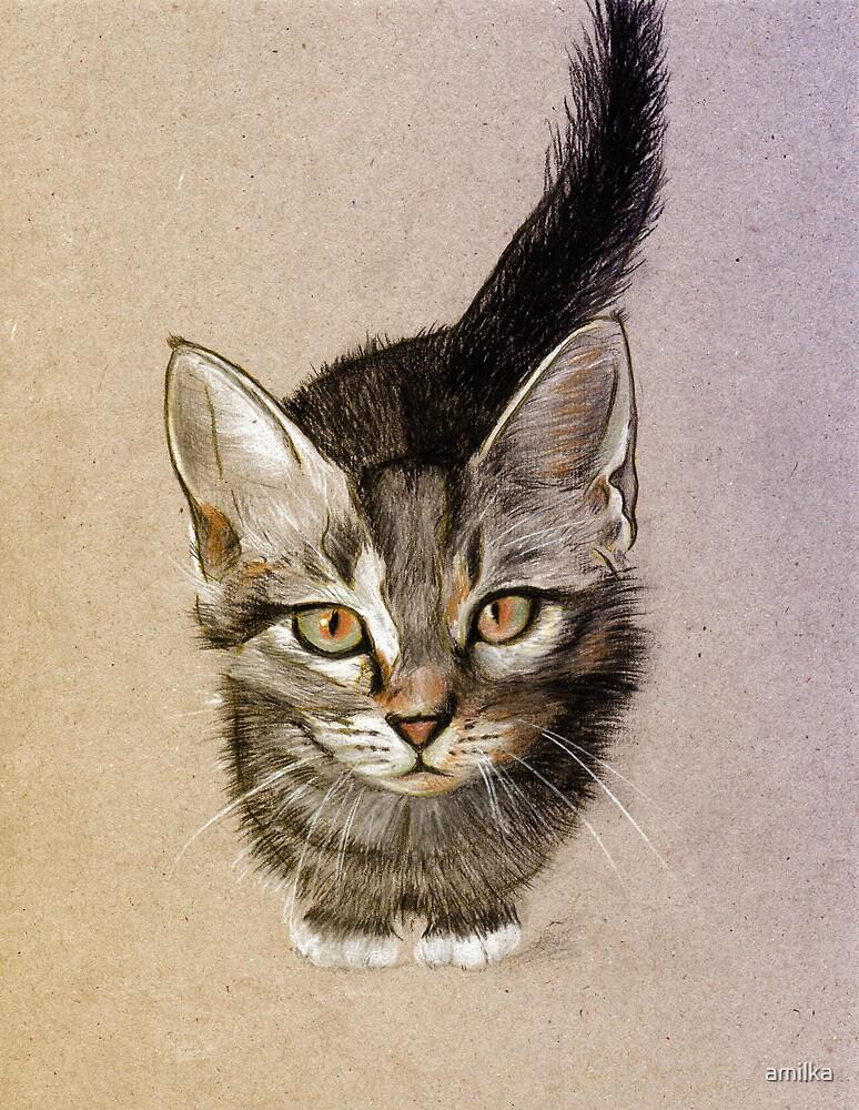 Kitty by amilka