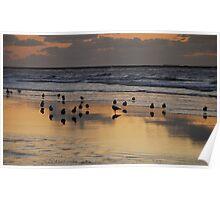 Seaside gulls at dusk Poster