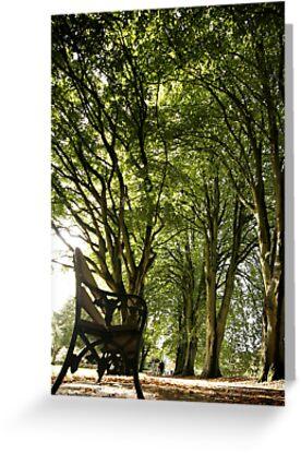 Park Bench by Donncha O Caoimh