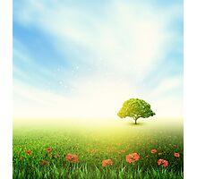 Summer, Field, Sky, Tree, Grass, Poppy Photographic Print