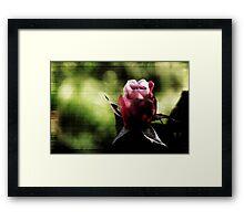 Soft Rose Weave Framed Print
